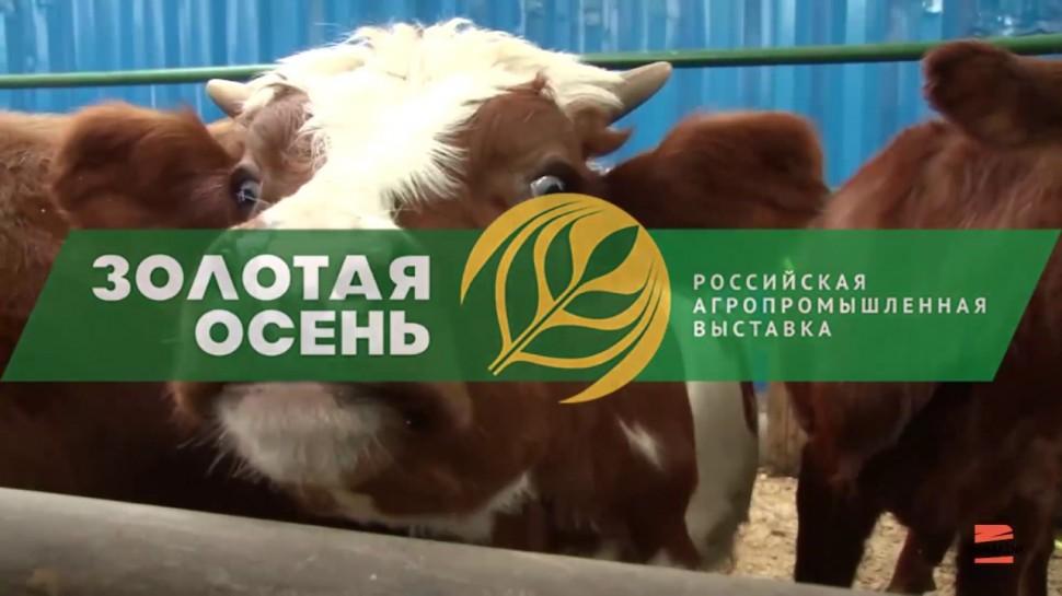 TerraLink: TerraLink на выставке «Золотая осень» – крупнейшем агропромышленном событии России - вид